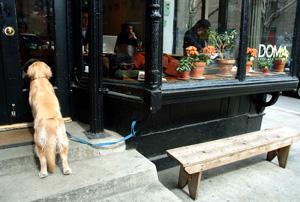 Manhattan er full av trivelige små kafeer. (Foto: Ronald Toppe)