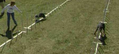 I øvelsen 60 porter slalåm vant den seks år gamle dobermanen Casanova. (Foto: SNTV)