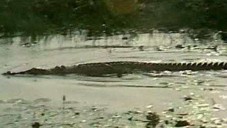 krokodille1-680x383 (Foto: REUTERS)