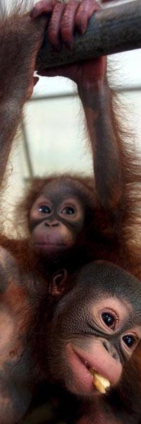 APESTREKER: Små og søte apekatter er noen av dyrene du kan treffe   i Sør-Afrika. (Foto: Scanpix)