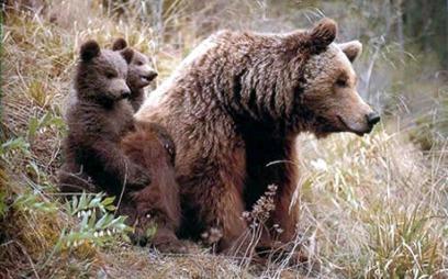 Binne med to unger. (Foto: Wikimedia)