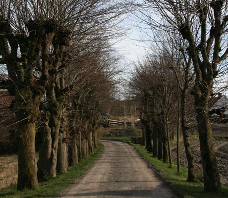 ALLE: Trærne står flott plantet på eiendommen til familien Huseby.   (Foto: Beate Larsen)