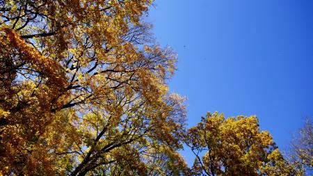 Pent høstvær i store deler av landet.  (Foto: Johannessen, Sara/SCANPIX)