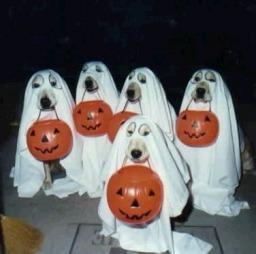 halloween-bikkjer