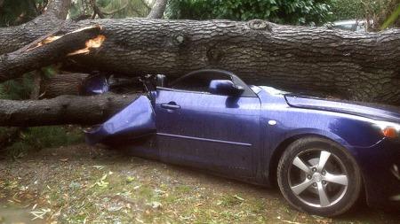 Kraftig vind veltet treet rett ned på den parkerte bilen.  (Foto: DANIEL VELEZ, ©AFP)
