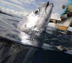 Fisk er en viktig matkilde på Filippinene. (Foto: AFP PHOTO/ROMEO GACA)