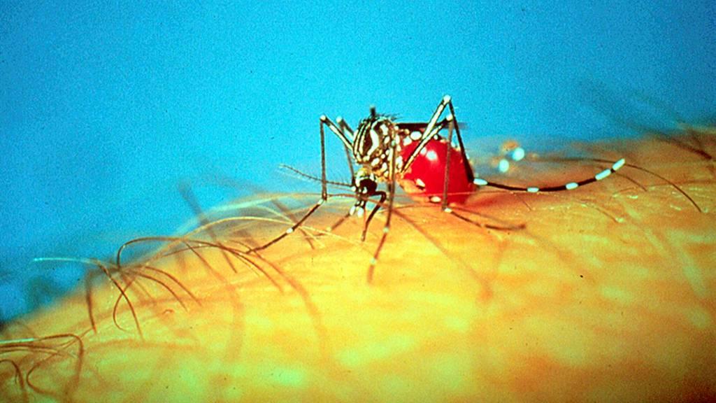 Et nytt kart skal hjelpe med å bekjempe malaria. (Foto: Ho/REUTERS)