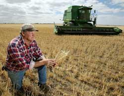Den australske bonden Marshall Rodda ser utover den magre hveteavlingen sin i 2006. (Foto: Scanpix)