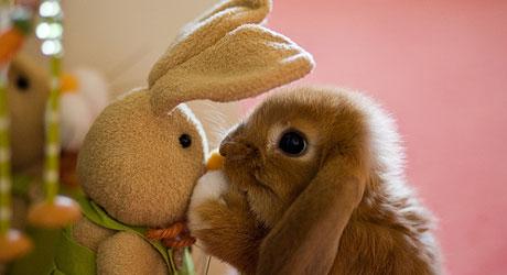 HJERTEKNUSER: Hvem klarer vel å bli i dårlig humør av denne   vennesøkende kaninen?
