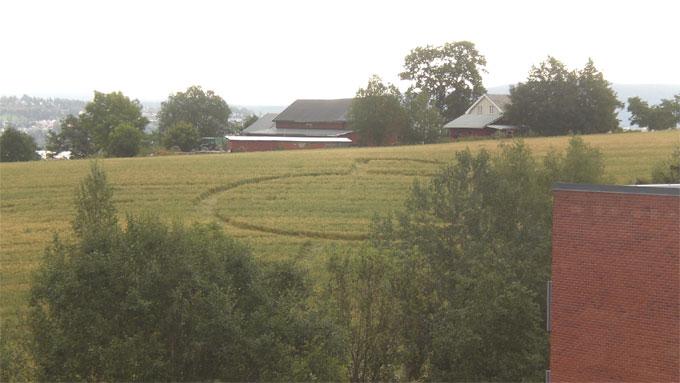 kornsirkel (Foto: Leserbilde: Lene Kjølberg)