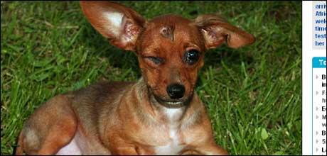 smokey-puppy-afteroperation