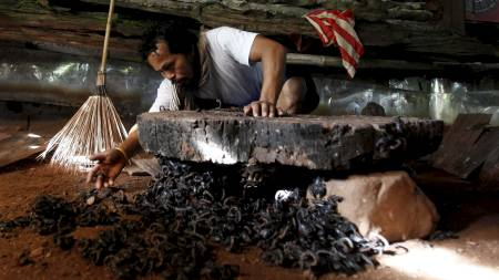 Suang Puangsri deler hjemmet sitt med nesten 5000 skorpioner.  (Foto: SUKREE SUKPLANG/REUTERS)