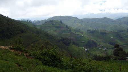 IKKE BRUK: Kongo-hills (Foto: PRIVAT)