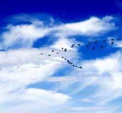 Fugleflokken prøver å kopiere 2-tallet i skyene. (Foto: Hanna Belise Hegvik)