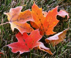Det er fare for nattefrost fra mandag! (Foto: Creatieve Commons)
