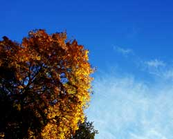 På Sør- og Østlandet kan du nyte høstfargene under blå himmel. (Foto: Sara Johannessen / SCANPIX)