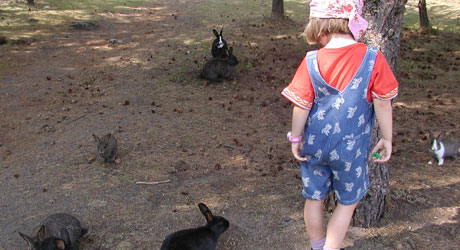 kaniner-oslo