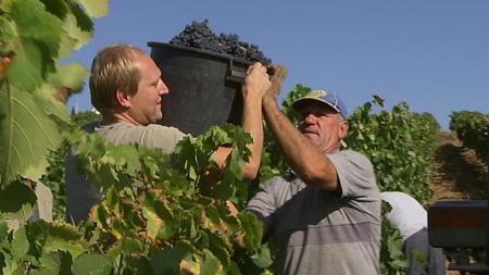 vin, portugal, innhøst, berens (Foto: TV 2)