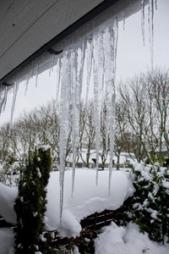 Bare siden jul har IF registrert frostskader for mellom 50 og 60 millioner kroner.  (Foto: Scanpix)