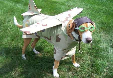 flyhund