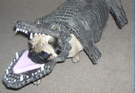 krokodillehund