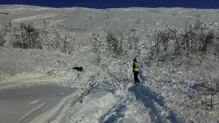 Spesialtrente hunder leter etter personer som kan være tatt av ras i Bjorli, Oppland. (Foto: Aud Flemsæter/Norske redningshunder)