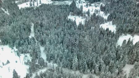 Solli i Asker hvor Faiza ble funnet død i et skogholt. (Foto: Dag Stamnes/mms TV 2)