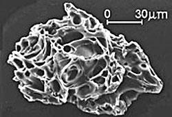 Slik ser asken ut i elektronmikroskop. Dette kornet er fra utbruddet   på St. Helens i 1980. (Foto: USGS)