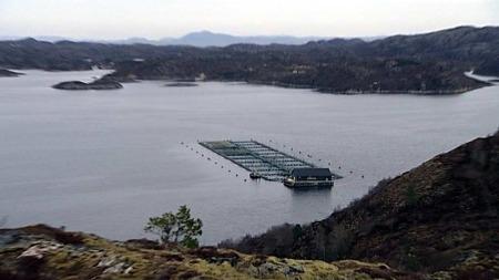 Hitra i Sør-Trøndelag. Her startet oppdrettseventyret for førti år siden. Kommunen lever stadig bedre av oppdrettsnæringa. (Foto: Silje Arntsberg / TV 2)