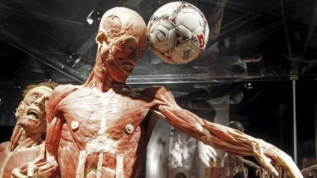 En plastifisert kropp stilles ut som fotballspiller under utstillingen i Bremen i April. (Foto: FOCKE STRANGMANN/AFP)