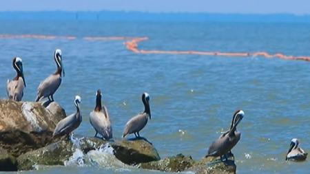 UNNSKYLD: Til disse bildene forteller BP-sjefen om alt arbeidet selskapet gjør for å rydde opp oljesølet - uten at det koster skattebetalerne en krone. (Foto: BP)