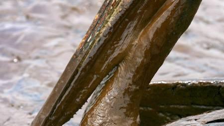 DEKKET AV OLJE: Bildene av pelikaner dekket i olje står i sterk kontrast til bildene som BP viser i sin nye reklamefilm. (Foto: SEAN GARDNER/Reuters)