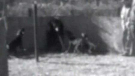 Dyreplageri bjørnejakt hunder Sør-Carolina (Foto: Humane society of the United States)