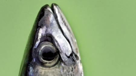 Eksportutvalget for fisk (EFF) jobber for at folk over hele verden skal spise mer norsk sjømat, og gjør det blant annet ved å fortelle om at det er lett å lykkes med sjømat. De formidler kostholdsråd som Folkehelsa anbefaler hvor det heter at man bør spise tre sjømatmåltider i uka. (Foto: Johannessen, Sara/SCANPIX)