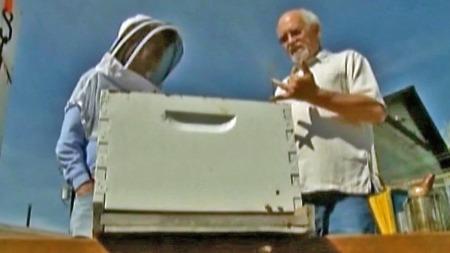 IMUN MOT BISTIKK: Jerry har jobbet med bier i mange, og beveger seg blant dem uten birøkterdrakt.  (Foto: CBS)