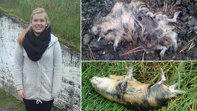 SJOKKERENDE LEMEN-FUNN: Runa Kjelland (15) fant mange døde lemen i Evje sentrum fredag ettermiddag. (Foto: Tips 02255)