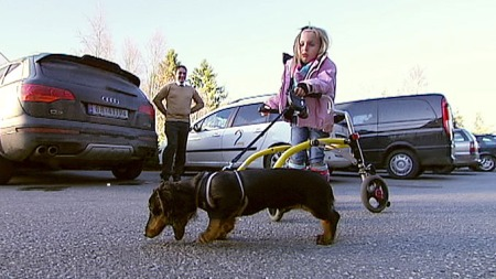 LUFTER HUNDEN: Nå kan Emilie (6) gå tur med hunden selv,  (Foto: Stein Akre/ TV 2)