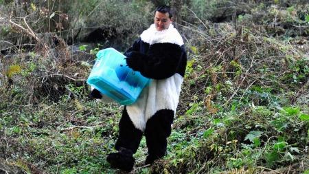 Panda forsker utkledt (Foto: Reuters)