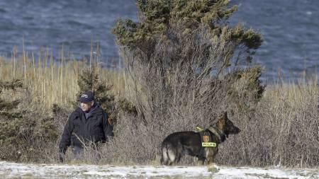 FUNNET DREPT: Likene av flere drepte er funnet på Long Island utenfor New York City. Her søker en likhund på stedet hvor likene ble funnet. (Foto: Seth Wenig/Ap)