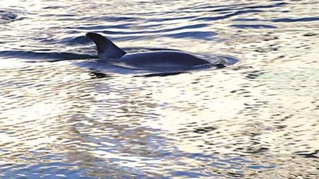 VAKTE OPPSIKT: Delfinen svømte rundt rett nedenfor rådhuset i Oslo. (Foto: Sveinung Kyte)