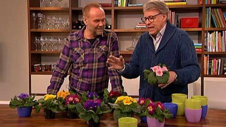 finn Schjøll (Foto: TV 2)