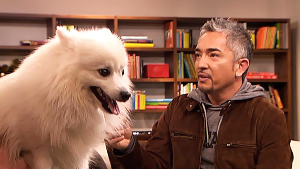 Cesar Millan gir råd om hva man kan gjøre med hunder som har separasjonsangst. (Foto: TV 2)