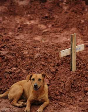 TROFAST: En hund sitter for andre dag på rad ved sin eiers grav   i Teresopolis nær Rio de Janeiro. Cristina Maria Cesario Santana døde   i flommen. Bildet er tatt 15. januar. (Foto: Vanderlei Almeida)