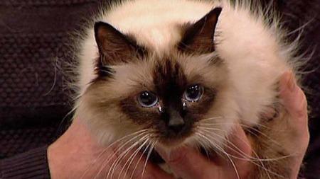katten Silke (Foto: TV 2)