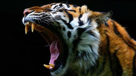 Av psykologen fikk Marit Bjørgen beskjed om å forestille seg at hun var en tiger. Det er hun fortsatt! (Foto: Illustrasjonsfoto)