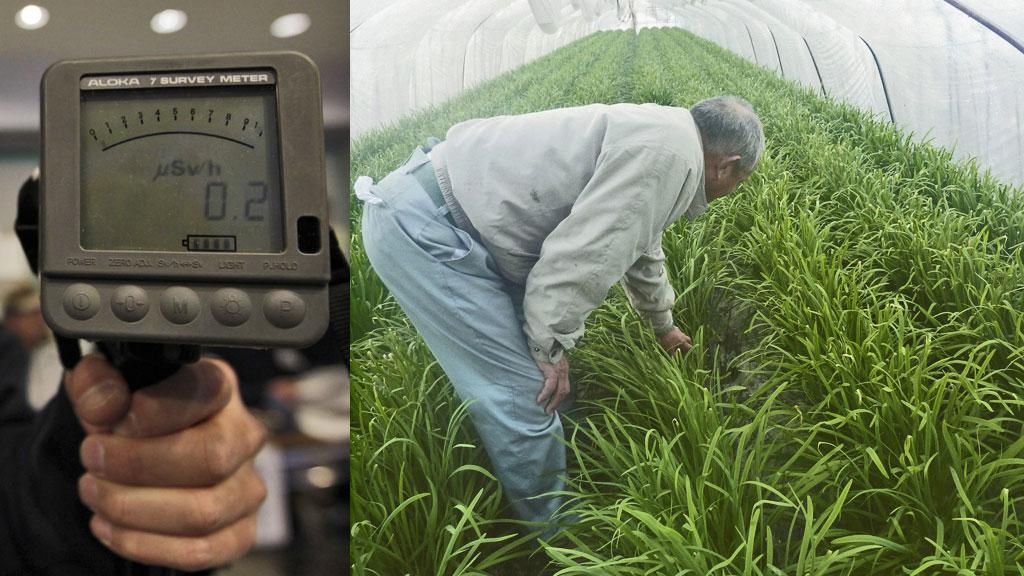 En bonde (innfelt t.h) frykter for gressløkavlingen sin etter at det flere steder er meldt om høye nivåer av radioaktivitet i grønnsaker i områdene rundt Fukushima-prefekturet. Radioaktivitet måles med apparater av den typen som er innfelt til venstre i bildet. (Foto: REUTERS)
