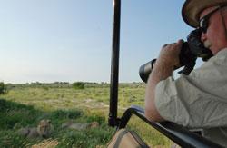 To store hannløver, fem meter unna. (Foto: Ronald Toppe)