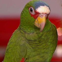 En papegøye er ikke et dyr for små barn. (Foto: TV 2)