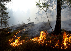 Skogbrann i Østfold i 2008.  (Foto: Cornelius Poppe / SCANPIX)