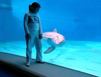 Opplevelsesparken Oltremare ligger like utenfor Rimini, og tilbyr   blant annet delfinshow, akvarium, IMAX-kino og temapark. (Foto: Bjørn   Moholdt)